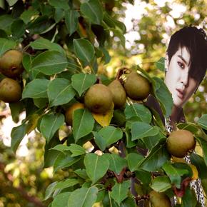 pear-tree-5